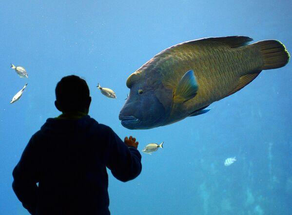 Un uomo visita l'Africarium, l'unico oceanario a tema dedicato esclusivamente all'esposizione della fauna africana, allo zoo di Wroclaw, il 19 novembre 2014. - Sputnik Italia