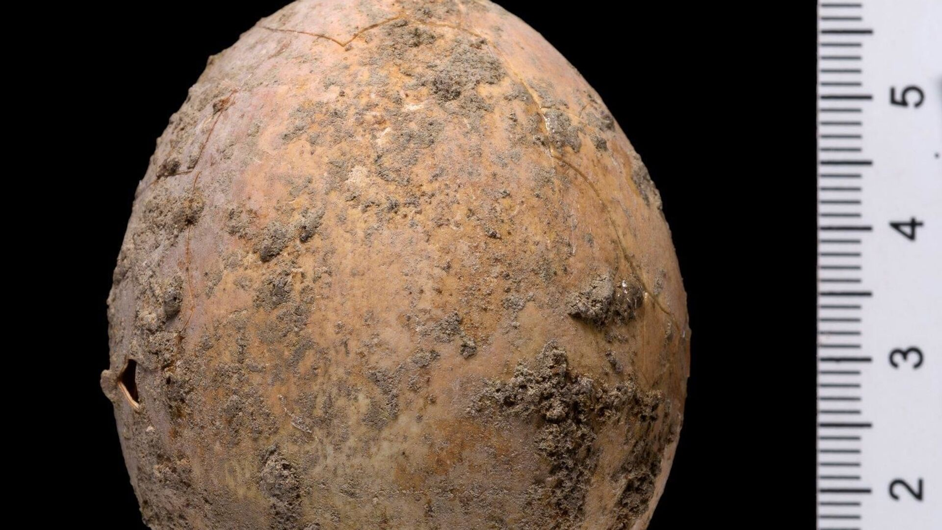 Israele, archeologi trovano un uovo intatto vecchio di 1000 anni e lo rompono per sbaglio - Sputnik Italia, 1920, 09.06.2021