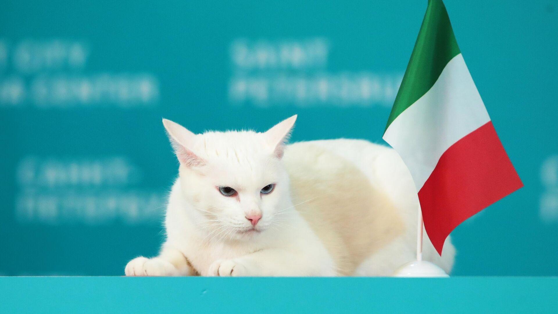 Il gatto Achille pronostica la vittoria dell'Italia - Sputnik Italia, 1920, 11.06.2021