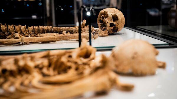 Два скелета, найденные в братской могиле в Оксфорде, Великобритания лежат в витрине Национального музея Дании - Sputnik Italia