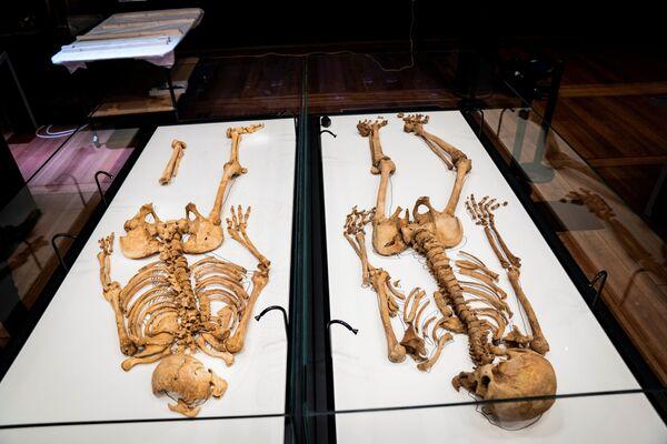 Due scheletri imparenti sono in una vetrina al Museo Nazionale della Danimarca, dopo che uno di loro è stato trovato in una fossa comune a Oxford. - Sputnik Italia