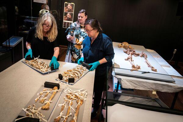 I dipendenti del Museo Nazionale della Danimarca disimballano uno scheletro umano. - Sputnik Italia