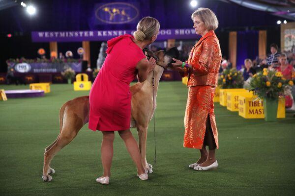 Un vincitore a sorpresa, almeno per molti spettatori che hanno commentato su twitter che la sua vittoria era la conferma che di cani non ci capiscono molto. - Sputnik Italia
