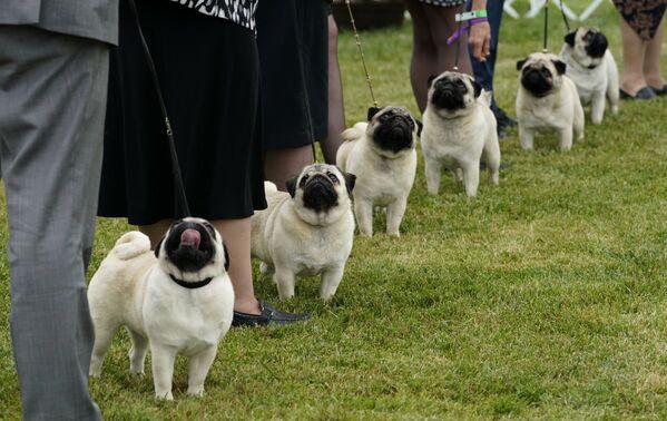 In totale hanno partecipato 2.500 cani. - Sputnik Italia
