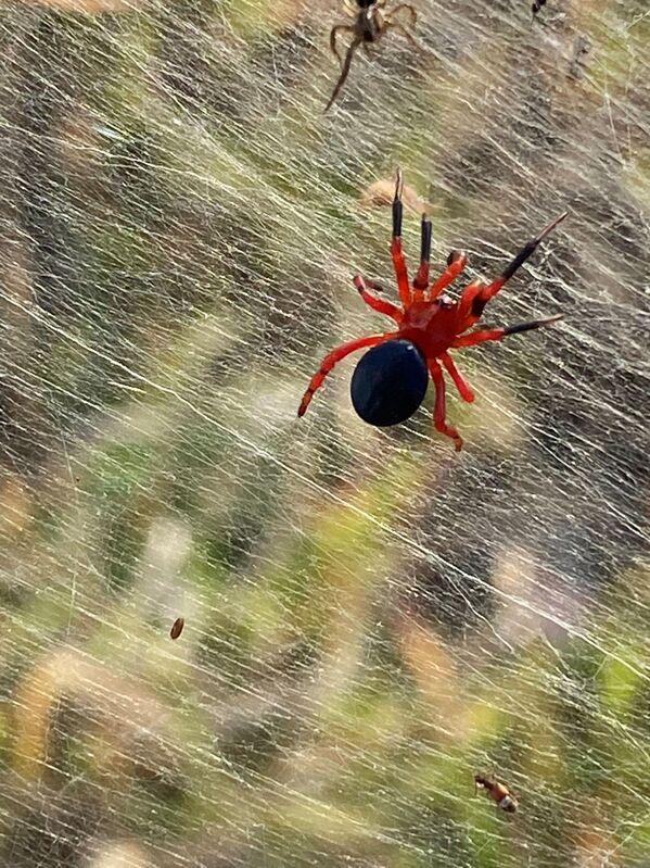 Gli insetti, obbedendo ad un unico impulso, hanno creato un'enorme tela vicino a laghi e paludi. - Sputnik Italia