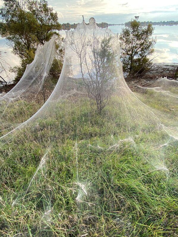 Gli insetti si arrampicano sulle pareti con una ragnatela. - Sputnik Italia