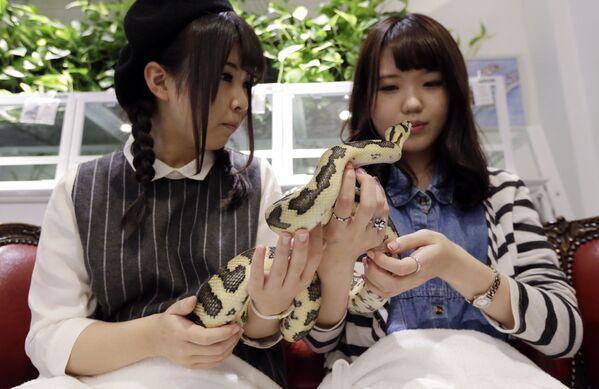 Le ragazze danno da mangiare un serpente allo Snake Center di Tokyo, Giappone. - Sputnik Italia