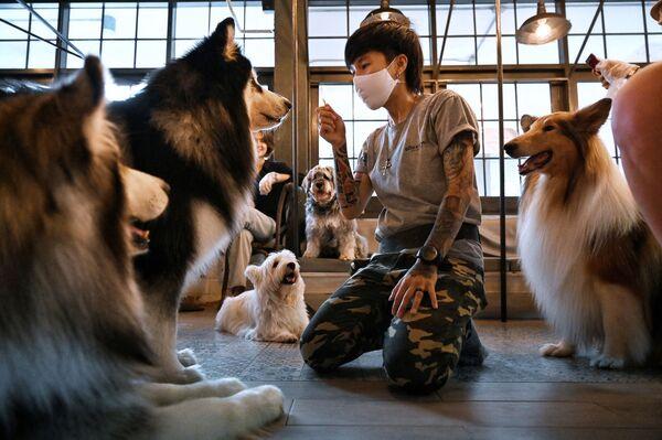 Un'addestratrice di cani che interagisce con i cani al Dog In Town Cafe di Bangkok, Thailandia. - Sputnik Italia