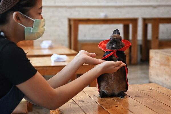 Un'addestratrice di cani che gioca con un coniglio che indossa un mantello al Rabbito Cafe di Bangkok, Thailandia. - Sputnik Italia