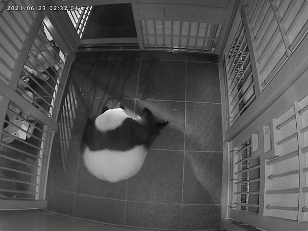 Uno dei cuccioli pesa 124 g secondo l'annuncio. Il peso dell'altro non è stato indicato né le immagini mostrano entrambi i piccoli ma solo uno. - Sputnik Italia