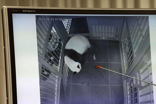 """""""I panda sono ora una famiglia di cinque componenti. Questa è una notizia davvero felice"""", ha detto il capo del governo giapponese Katsunobu Kato, porgendo le sue congratulazioni ai guardiani dello zoo per la nascita. - Sputnik Italia"""