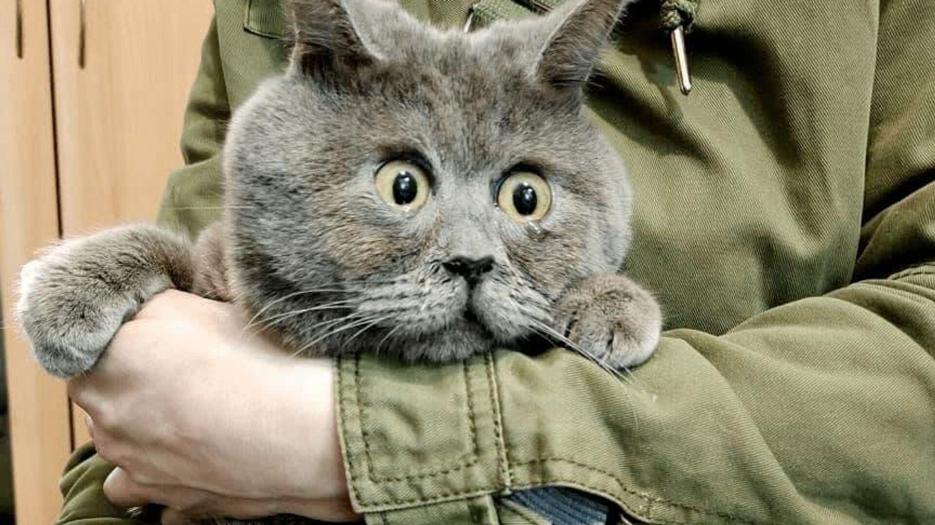 Il gatto Fedya - Sputnik Italia, 1920, 25.06.2021