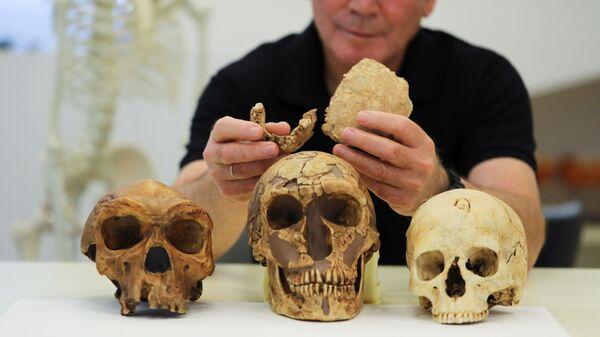 Профессор Тель-Авивского университета Исраэль Гершковиц держит два куска окаменелой кости ранее неизвестного вида древнего человека, обнаруженные на стоянке Нешер Рамла в центре Израиля - Sputnik Italia