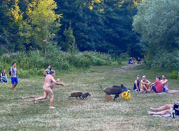 Un bagnante nudo sta inseguendo un cinghiale che gli ha rubato il laptop mentre l'uomo si stava rilassando sul lago Teufelsee a Berlino, una scappatella che è diventata virale, 5 agosto 2020 - Sputnik Italia