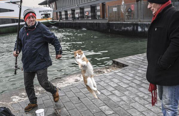 Un gatto salta per acchiappare un pesce tirato fuori da un pescatore turco il 12 dicembre 2018 nel distretto di Karakoy a Istanbul. - Sputnik Italia