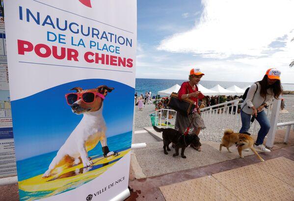 La nuova spiaggia destinata ai cani è sicura, separata dagli altri siti di balneazione, in grado di consentire mobilità e possibilità di un bagno in mare ai cani ed ai loro proprietari. - Sputnik Italia