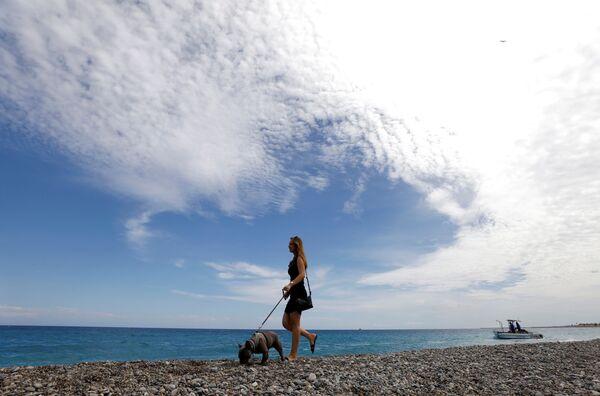 Con ogni probabilità a settembre del prossimo anno verrà organizzata in città una grande manifestazione dedicata proprio ai cani. - Sputnik Italia