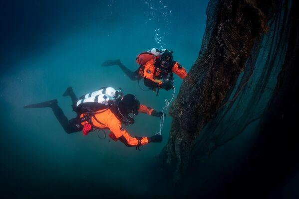 I subacquei nuotano vicino ad un allevamento ittico. - Sputnik Italia