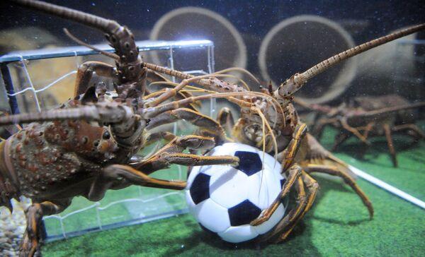 Due scampi combattono per un pallone da calcio nella loro vasca decorata come un campo da calcio il 16 giugno 2010 all'acquario Sea Life di Berlino.  - Sputnik Italia