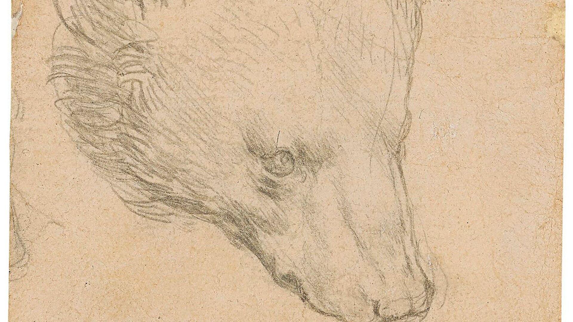 """Record per la """"Testa d'orso"""" di Leonardo da Vinci: all'asta per oltre 10 milioni di euro - Sputnik Italia, 1920, 09.07.2021"""