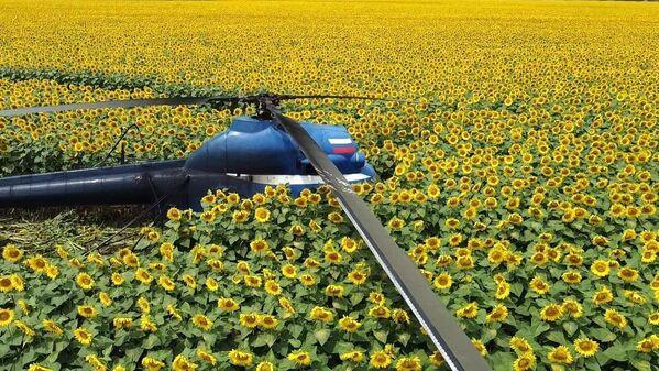 Un elicottero Mi-2 che ha effettuato un atterraggio di emergenza durante i lavori agricoli vicino alla città di Prokhladny in Cabardino-Balcaria, Russia. - Sputnik Italia