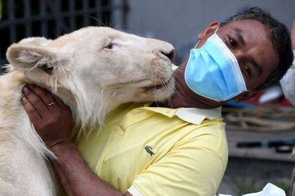 Un leone si avvicina a un lavoratore dopo il ritorno nella sua casa a Phnom Penh, Cambogia, 5 luglio 2021. - Sputnik Italia