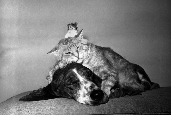 Gatto, cane e criceto in tranquillità. - Sputnik Italia