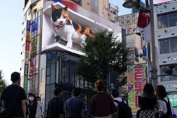 I passanti guardano un enorme gatto in 3D che è spuntato in una affollata strada nel famoso quartiere commerciale di Shinjuku a Tokyo, il 1 agosto 2021. - Sputnik Italia