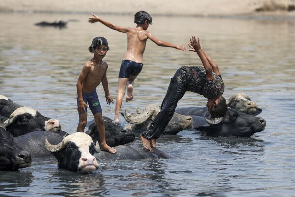 Ragazzi iracheni nuotano insieme ai bufali nel fiume Diyala, distretto di Fadiliyah, a nord-est di Baghdad, il 2 agosto 2021. - Sputnik Italia