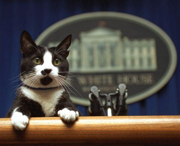 Il gatto Socks del presidente Bill Clinton nella sala riunioni della Casa Bianca a Washington, 19 marzo 1994. - Sputnik Italia