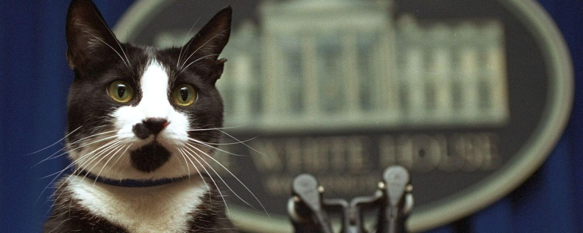 Кот президента Билла Клинтона Сокс смотрит на трибуну в зале для брифингов Белого дома в Вашингтоне - Sputnik Italia, 1920, 08.08.2021