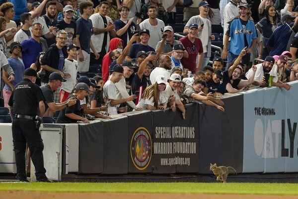 I tifosi salutano un gatto che è entrato in campo di una partita di baseball tra i New York Yankees e i Baltimore Orioles, New York, 2 agosto 2021. - Sputnik Italia