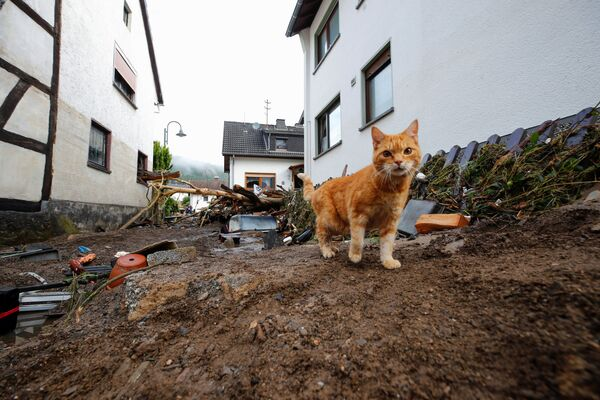 Un gatto cammina accanto ai detriti portati dall'alluvione a Schuld, in Germania, 15 luglio 2021. - Sputnik Italia