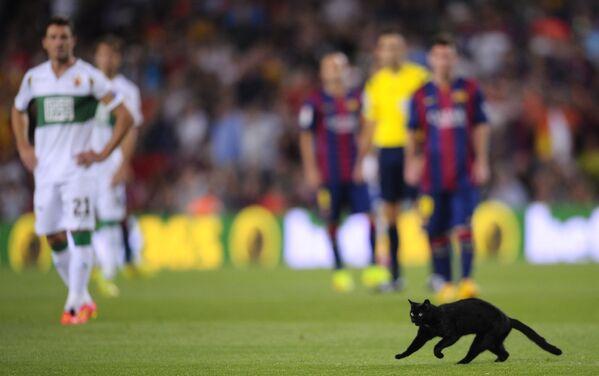 Un gatto corre sul campo durante una partita di calcio tra FC Barcelona ed Elche allo stadio Camp Nou a Barcellona, 24 agosto 2014. - Sputnik Italia