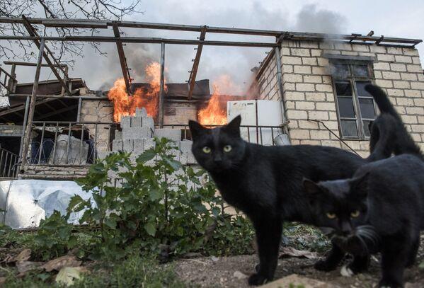 I gatti vicino a una casa in fiamme nel villaggio di Karegakh nel Nagorno-Karabakh. - Sputnik Italia