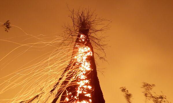 La foresta amazzonica brucia a Rio Pardo, Rondônia, Brasile, il 15 settembre 2019. - Sputnik Italia