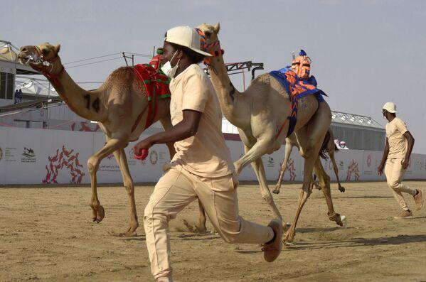 I cammelli sono posso raggiungere la velocità di 65 km/h in brevi scatti e mantenere una velocità costante di 40 km/h. - Sputnik Italia