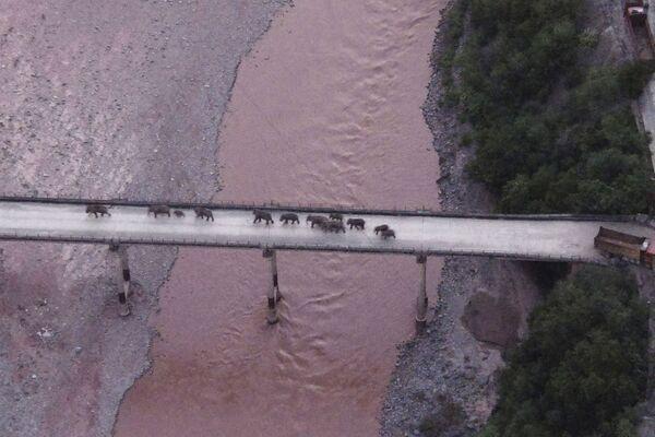 Alcuni elefanti selvatici attraversano un viadotto sovrastante un fiume nei pressi della città di Yuxi, provincia sudoccidentale dello Yunnan, domenica 8 agosto 2021. Per gli animali è stato organizzato un percorso per tornare alla riserva naturale nella prefettura autonoma di Xishuangbanna Dai. - Sputnik Italia