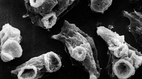 Вид одноклеточных организмов Неглерия Фоулера - Sputnik Italia