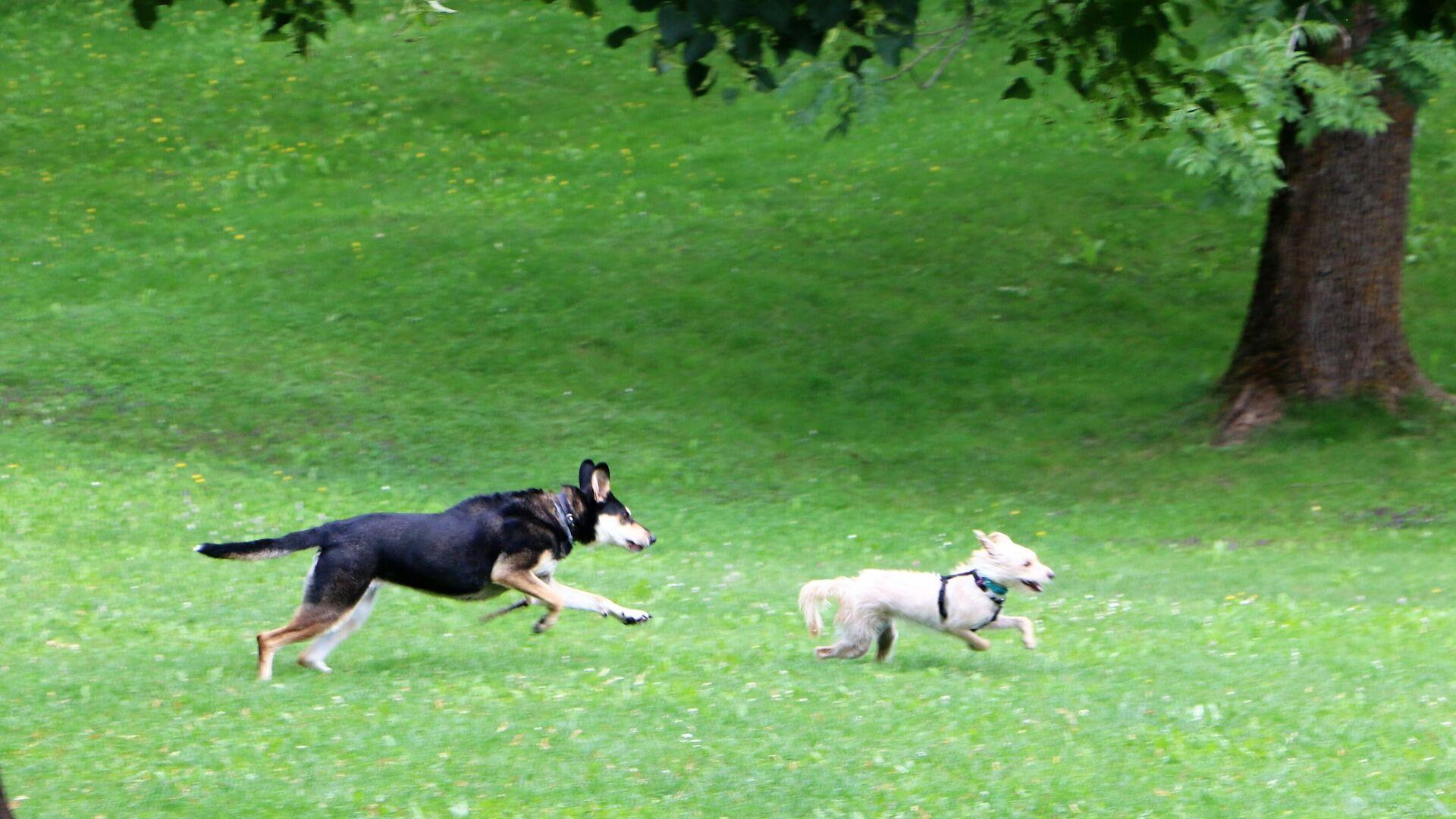 Un cane con un padrone fanno un giro in un parco in Italia - Sputnik Italia, 1920, 27.08.2021