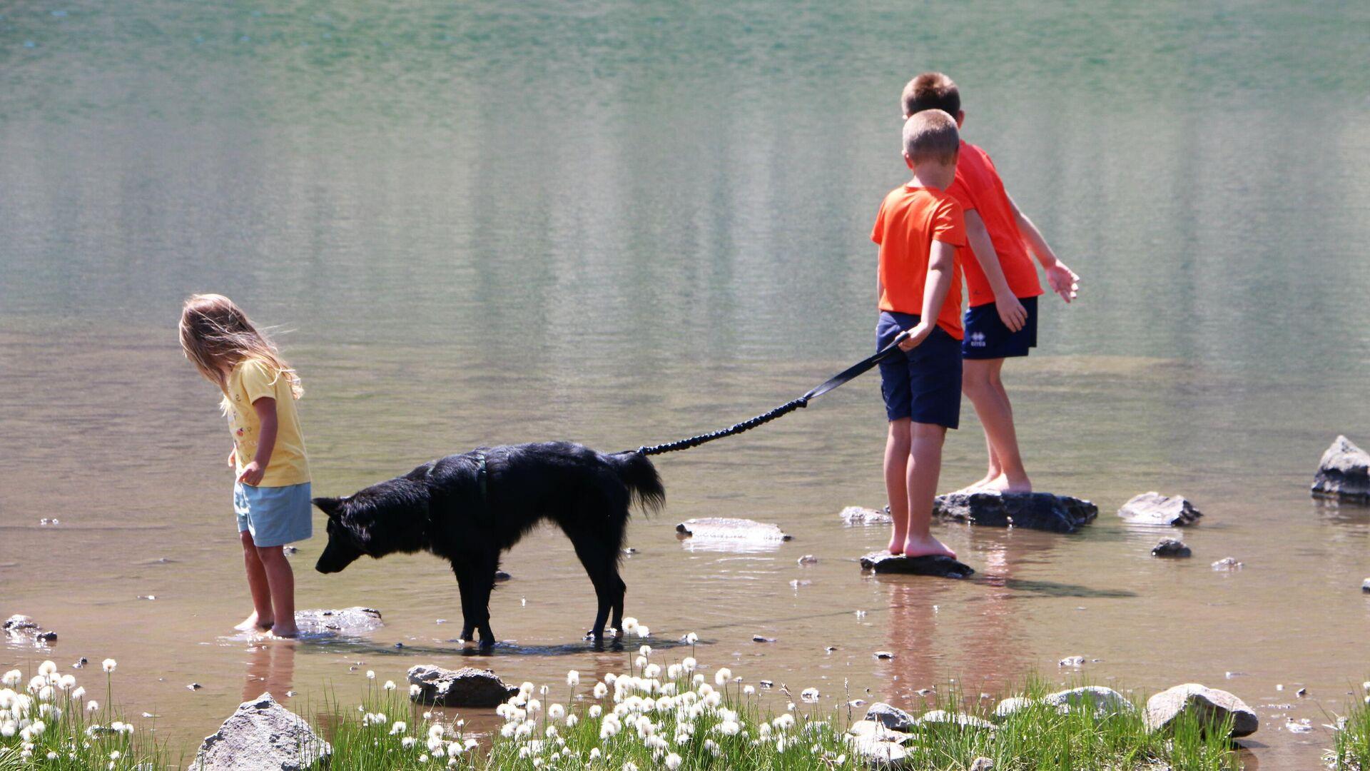 Un cane con un padrone fanno un giro in un parco in Italia - Sputnik Italia, 1920, 19.08.2021