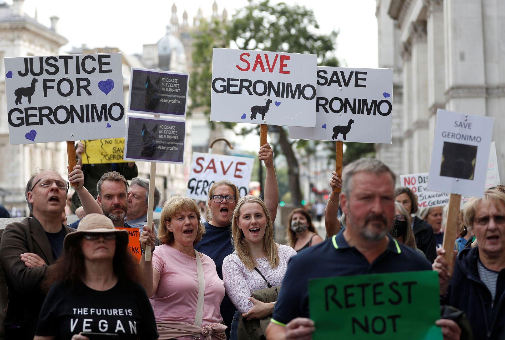 Protesta a Londra per salvare l'alpaca Geronimo malato di tubercolosi, Gran Bretagna - Sputnik Italia, 1920, 19.08.2021