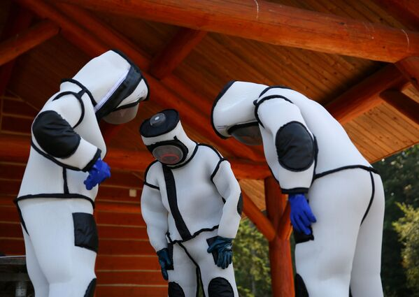 In Giappone da 30 a 50 persone ogni anno vengono uccise dai calabroni giganti. Una sitauzione analoga si registra nelle province cinesi.  - Sputnik Italia