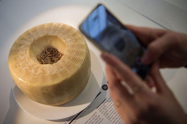 Formaggio di vermi vivi in mostra al Disgusting Food Museum in Francia. - Sputnik Italia