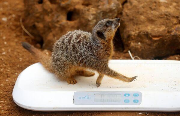 Il database è condiviso con gli zoo di tutto il mondo e riguarda migliaia di creature in via d'estinzione. - Sputnik Italia
