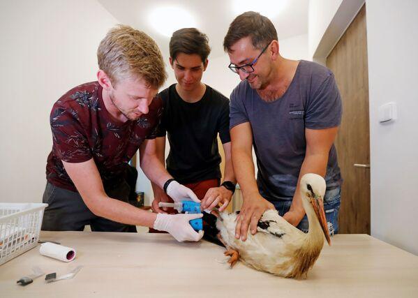 Secondo quanto afferma il personale della struttura, la protesi è stata realizzata in plastica stampata da una stampante 3D. - Sputnik Italia