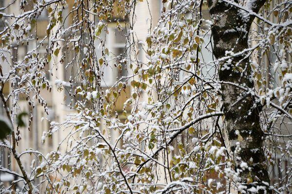 La prima neve a Mosca. - Sputnik Italia