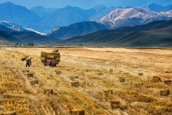 Un agricoltore cinese fa la raccolta. - Sputnik Italia