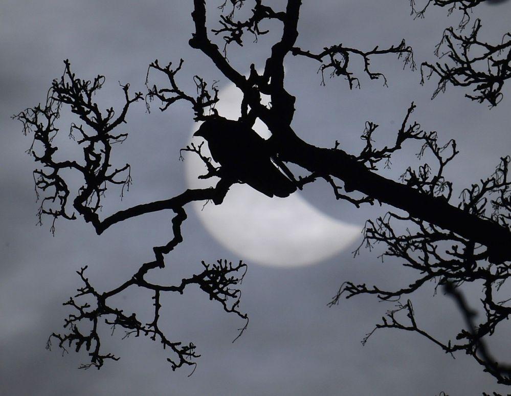 Un uccello arroccato su un ramo e sullo sfondo il disco solare coperto dalla Luna.