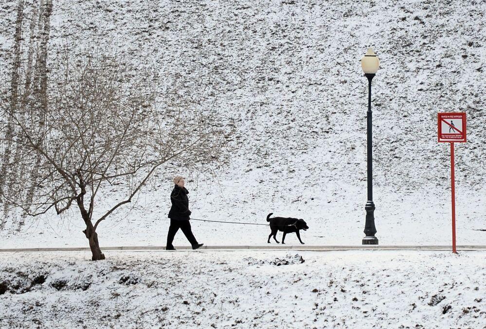 Un passante porta a spasso il suo cane nel parco del monastero di Novodevichy a Mosca